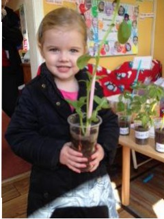 The runner beans that we planted are making reception look like a jungle! So it's time for them to  go home and be planted in a garden or a bigger pot. We are looking forward to the day when the beans are ready for eating.